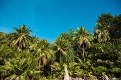 Palme verde intenso sotto cielo blu Immagine Stock Libera da Diritti
