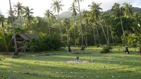 Palme verdi contro il cielo nuvoloso Vista maestosa delle piante tropicali meravigliose che crescono contro il cielo nuvoloso blu archivi video