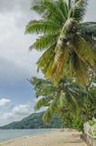 Palme verdi e un recinto bianco alla spiaggia ed alle colline verdi Immagine Stock