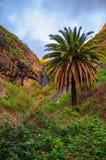 Palme vicino al villaggio con le montagne, Tenerife, isole delle isole Canarie di Masca fotografie stock libere da diritti