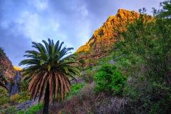 Palme vicino al villaggio con le montagne, Tenerife, isole delle isole Canarie di Masca fotografia stock