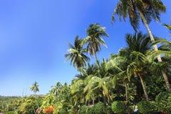 Palme, vista di angolo basso contro cielo blu Fotografie Stock