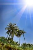 Palme, vista di angolo basso contro cielo blu Immagini Stock