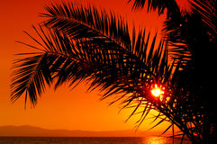 Palme während des Sonnenuntergangs Stockbild