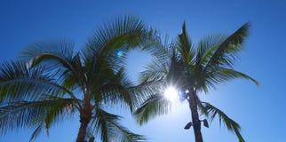 Palme in Waikiki stockfotografie