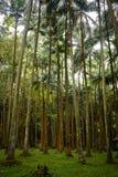 Palme-Wald stockfotografie