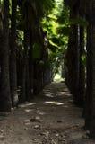 Palme-Waldweg Lizenzfreies Stockbild