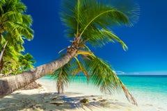 Palme, welche die einladende Lagune auf Fidschi-Insel overhanding ist lizenzfreie stockfotografie
