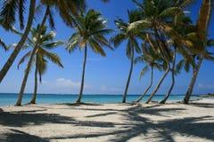 Palme zeichnete Strand in Punta Cana, Dominikanische Republik Stockfoto