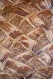 Palmebeschaffenheit Lizenzfreie Stockbilder