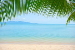 Palmeblätter über Luxusstrand stockbild