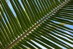 Palmeblätter Stockfotos