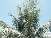 Palmeblätter auf Himmelhintergrund CocoPalmeweinlese tonte Foto Stockfotos
