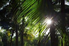 Palmeblätter auf sonnigem Himmelhintergrund Tropische Baumkronen auf blauem Himmel Stockfotos