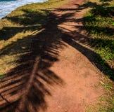 Palmeblätter warfen Schatten auf einem orange Sand Stockfotos
