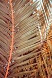 Palmebl?tter stockbild
