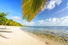 Palmeblatt über Ozeanwasser auf tropischem Strand stockfotografie