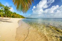Palmeblatt über Ozeanwasser auf tropischem Strand lizenzfreie stockbilder