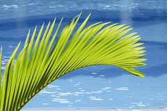 Palmeblatt Lizenzfreie Stockbilder