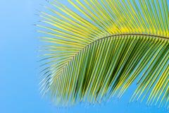 Palmeblatt auf blauem sauberem Himmelhintergrund lizenzfreie stockfotografie