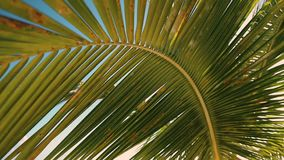 Palmeblatt gegen blauen Himmel Palmen an der Tropeninselküste stock video