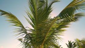 Palmeblatt gegen blauen Himmel Palmen an der Tropeninselküste stock video footage