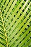 Palmeblätter Stockfoto
