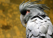 PalmeCockatoo Stockfoto