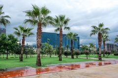 Palmegasse an der Promenade von Batumi Stockfotos