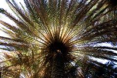 Palmeira Foto de Stock Royalty Free
