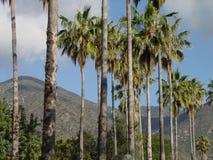 A palmeira alinhou a estrada Fotografia de Stock Royalty Free