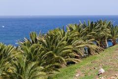 Palmeira amarela da paisagem, canariensis de Phoenix O estoque data a foto foto de stock