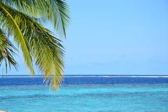Palmeira ao lado do mar fotos de stock