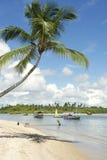 Palmeira Bahia Nordeste Brazilian Beach imagens de stock royalty free