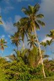 Palmeira bonita nas Caraíbas fotos de stock