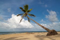 Palmeira bonita nas Caraíbas fotografia de stock