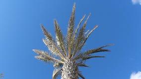 Palmeira, céu azul e sol filme