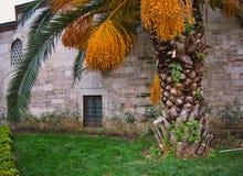 Palmeira com muitas datas na frente de uma casa imagens de stock