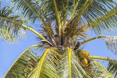 Palmeira com o céu ensolarado na ilha de Filipinas fotos de stock