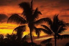Palmeira com por do sol fotos de stock