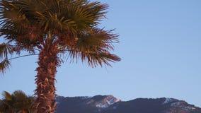 Palmeira contra o céu azul iluminado pelo sol de aumentação vídeos de arquivo
