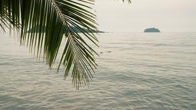 Palmeira contra o mar video estoque