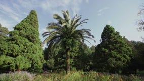 A palmeira cresce em um prado da flor em um dia ensolarado da floresta conífera no parque botânico video estoque