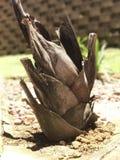 Palmeira crescente Imagem de Stock Royalty Free
