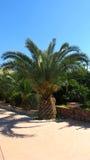 Palmeira curto e larga do abacaxi em um parque fotos de stock royalty free