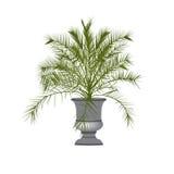 Palmeira da data em um vaso Fotografia de Stock Royalty Free
