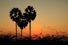 Palmeira da forma do coração Fotos de Stock Royalty Free