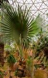 Palmeira da parte inferior de rio Foto de Stock
