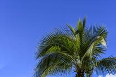 Palmeira de encontro ao céu imagem de stock