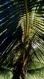 Palmeira de Gardem fotografia de stock